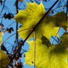 Leaves Jigsaw P ...
